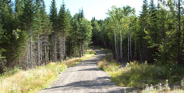 Wilderness Realty – Maine Land Sale Specialists