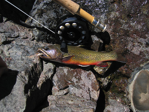 2014 may wilderness realty maine land sale specialists for Maine trout fishing