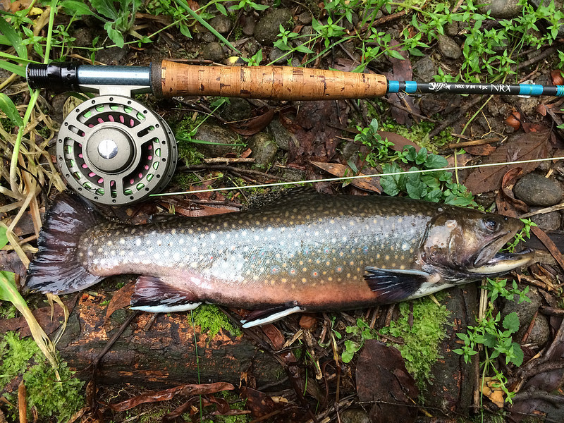 The Maine Brook Trout Outlook for 2015 - Wilderness Realty ... - photo#43