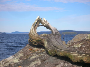 Mountain Through Driftwood