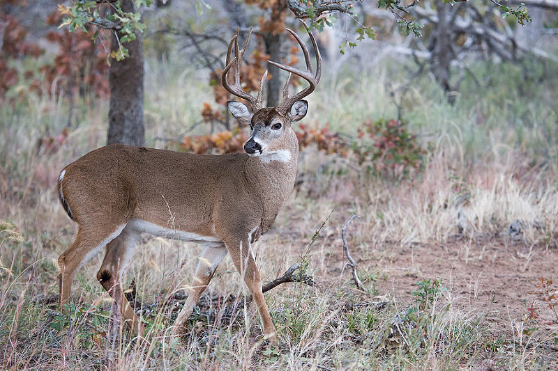 Maine kicks off its 2016 deer hunting season for firearms for Indiana fishing license age